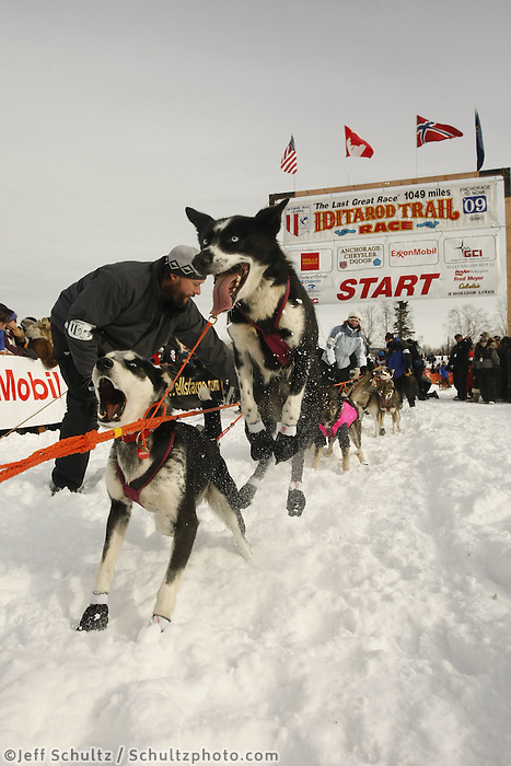 Bjonar Anderson dogs at the start line on Sunday during the restart day of Iditarod 2009 in Willow , Alaska