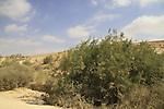 Israel, Negev, Bor Havarim, a Nabatean cistern in Wadi Havarim