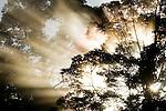 Sunbeams penetrating through lowland rainforest canopy, Tawau Hills Park, Sabah, Borneo, Malaysia