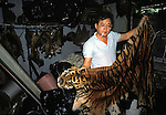Sumatran Tiger and clouded leopard ( behind) skins in a Singapore skin  trader's shop.  ..This man claimed that he could supply 15 skins a month  which  effectively would wipe out  the entire Sumatran Tiger population.