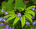 Wildflowers and fern in the Tremont area of the Great Smoky Mountains National Park.