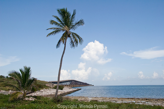 A solitary coconut palm stands grad over the Old Flagler Bridge.