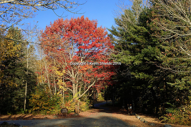 Fall in Camden Hills State Park, Maine, USA
