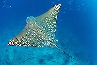 Malediven, Indischer Ozean, Baa Atoll, Maldives, Indian Ocean