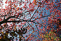 02/10/16 <br /> <br /> Stunning autumn colours in Darley Dale in the Derbyshire Peak District this morning. <br /> <br /> All Rights Reserved: F Stop Press Ltd. +44(0)1773 550665   www.fstoppress.com