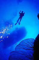 DIVERS<br /> Sea Fan, Diver &amp; Boat<br /> Sea fan is at a depth of 120 feet.