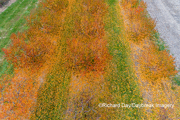 63801-12103 Peach orchard in fall-aerial  Marion Co. IL