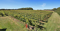 BNPS.co.uk (01202 558833)<br /> Pic Savills/BNPS<br /> <br /> 6 acre vinyard...<br /> <br /> Heard it through the grapvine? - Kent property comes with a 4500 bottle vinyard.<br /> <br /> A charming farmhouse has emerged for sale which is perfect for wine lovers - as it has its own vineyard.<br /> <br /> Ulley Farmhouse in Kennington, Kent, comes with the neighbouring vineyard which produces 3,500 bottles of sparkling rose wine and 1,000 bottles of still rose each year.<br /> <br /> The vines were planted on the 5.75 acre farm by Chris and Rachel Newman 10 years ago, who have sold the wine through farmers markets.<br /> <br /> They are selling the property with estate agents Savills who have given it a pricetag of £1.35million.<br /> <br /> The Grade II listed five bedroom farmhouse dates back to the 16th century, with some later alterations.