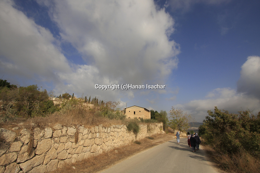 Israel, Shephelah, Olive picking season in Beth Gemal