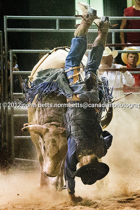 RAM Rodeo Tour, at the Woodstock Fair,.22 August, 2012, in Woodstock, Ontario, Canada..photo©2012 by Norm Betts.normbetts@canadianphotographer.com.416 460 8743