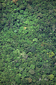 Roraima State,  Amazon, Brazil. Aerial view of unbroken rainforest canopy showing mixed species of trees.