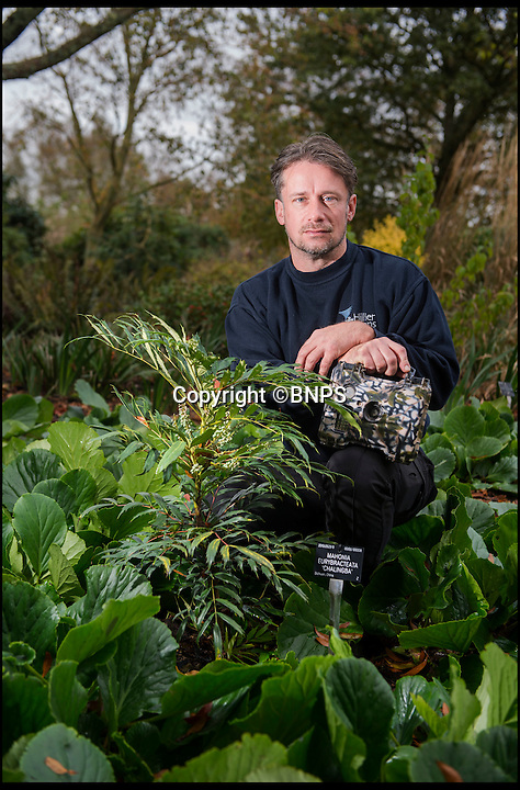BNPS.co.uk (01202 558833)Pic: PhilYeomans/BNPS<br /> This incredibly rare Mahonia, collected from the wild, is the only one remaining from the three planted.<br /> <br /> Barry Clarke from the Sir Harold Hillier gardens in Hampshire has had to resort to extreme measures to nip in the bud a spate of exotic and rare plant theft's from the historic gardens.<br /> <br /> Staff are rigging up motion senser camera's around the 180 acre site in a bid to deter the green fingered villans.<br /> <br /> Plant rustling is becoming an increasing problem across the nation's parks and gardens, with the rarest plants being especially targeted in raids in the dead of night.
