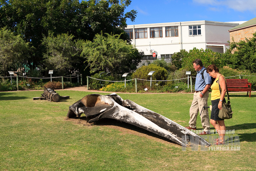 Two tourists looking at the remains of a whale at Mossel Bay, Dias museum, South Africa.