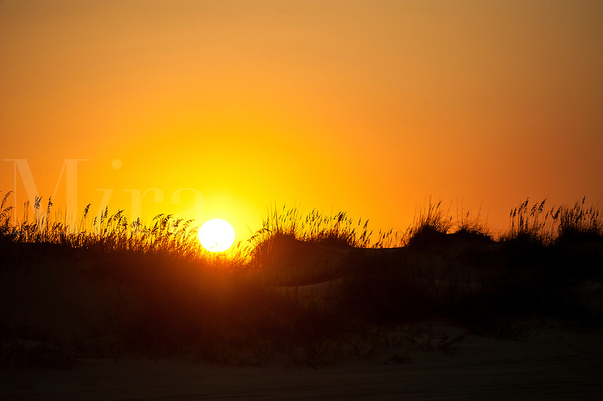 Dune sunrise, Outer Banks, North Carolins, USA