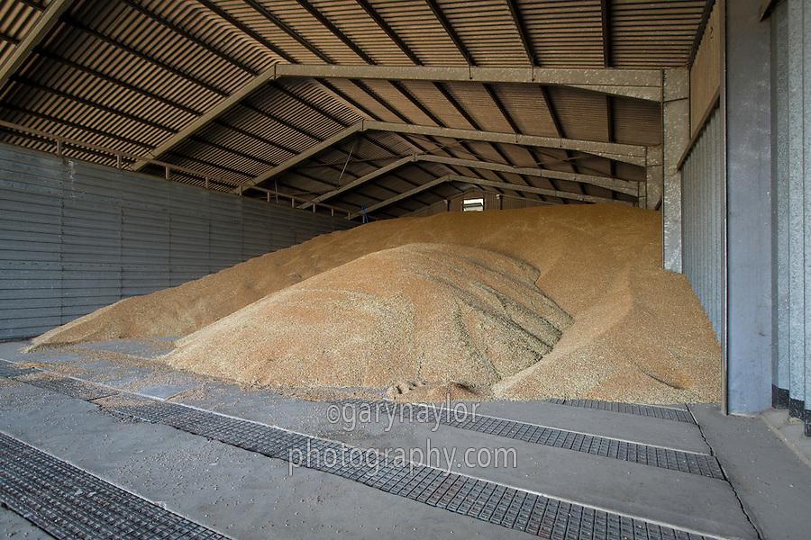 Wheat in grainstore