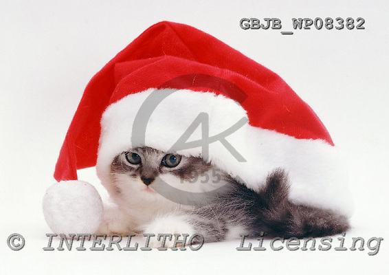Kim, CHRISTMAS ANIMALS, photos, GBJBWP08382,#XA# stickers