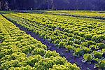 Agricultura orgânica. Correias. Rio de Janeiro. 2008. Foto de Luciana Whitaker