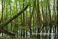 63895-15015 Swamp along Snake Road LaRue Pine Hills Otter Pond Natural Area Shawnee National Forest Union Co. IL