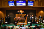 SARATOGA SPRINGS, NY- AUGUST 06: Hip #62 by American Pharoah, out of Party Silks, a colt bred in New York and consigned by Summerfield (Francis & Barbara Vanlangendonck) Agent For Sunnyfield Farm sells for 1 million dollars on Day 1 of the Fasig Tipton Saratoga Select Yearling Sale at the Humphrey S. Finney Sales Pavilion on August 6, 2018 in Saratoga Springs, New York. (Photo by Alex Evers/Eclipse Sportswire)