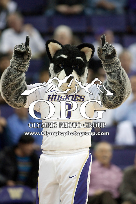 Jan 10, 2012:  Washington mascot Harry entertained the crowed during the game against Seattle University.  Washington defeated Seattle University  91-83 at Alaska Airlines Arena Seattle, Washington..