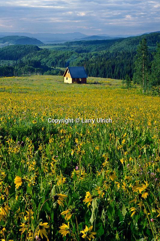 Northern mule's ears and cabin<br /> Ohio Creek Valley<br /> West Elk Mountains<br /> Rocky Mountains,  Colorado
