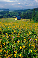 Northern mule's ears and cabin<br />