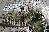 Grossbritannien, England, Kew: Stadtteil Londons im Stadtbezirk London Borough of Richmond upon Thames - im Temperate House des Royal Botanic Gardens, inzwischen UNESCO Weltkulturerbe | United Kingdom, England, Greater London, Kew: district in the London Borough of Richmond upon Thames - Interior of the Temperate House at Royal Botanic Gardens, UNESCO World Heritage Site