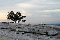 Stock photo: Two pine trees stand on a slope on top of the stone mountain in Georgia as sun sets and sky takes colors.