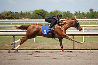 #2Fasig-Tipton Florida Sale,Under Tack Show. Palm Meadows Florida 03-23-2012 Arron Haggart/Eclipse Sportswire.