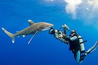 Scubazoo cameraman Jason Isley films oceanic whitetip shark, Carcharhinus longimanus, off the Kona Coast of Hawaii Island (the Big Island) Hawaiian Islands (Central Pacific Ocean)