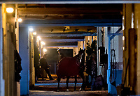 LOUISVILLE, KY - MAY 01: Horses walk shed row at Churchill Downs on May 1, 2018 in Louisville, Kentucky. (Photo by Scott Serio/Eclipse Sportswire/Getty Images)