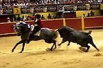 Medellin, Colombia, La Macarena Stadium, Bullfighting Festival, Picadore On Horseback Dances With The Bull