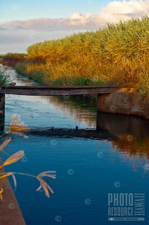 Sugar irrigation canal, Upcountry Maui