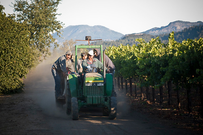 Workers leave vineyard after night of picking.  Mt. St. Helena in distance