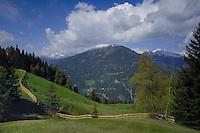 New wooden cattle fence undulating through the alpine fields. Imst district, Tyrol, Austria