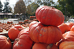 Pumpkins in Capitola
