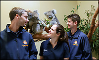 BNPS.co.uk (01202 558833)<br /> Pic: Longleat/BNPS<br /> <br /> Longleat staff have been training in koala care in Australia.<br /> <br /> One of Australia's most iconic but increasingly threatened species has received a boost as a group of koalas have arrived in Britain to start a new European breeding group.<br /> <br /> The five southern koalas, four females and one male, are part of a ground-breaking initiative to start a new breeding programme for Europe, a sort of back-up population away from the threats the species face in their home country, such as bushfires and disease.<br /> <br /> The cuddly marsupials made the epic journey from Adelaide in Australia to Longleat in Wiltshire, which will be the only place in Europe visitors can see the bigger of the country's two subspecies.<br /> <br /> Longleat has created a special new enclosure for them, including developing a 4,000-tree eucalyptus plantation to keep the koalas well-fed.<br /> <br /> Both the South Australian Government and Cleland Wildlife Park have very strict rules on allowing the animals out of the country.