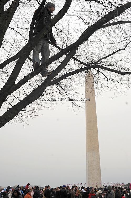 "A man climbs a tree to watch the ""We Are One"" concert in celebration of Barack Obama's inauguration as president of the United States at the Lincoln Memorial in Washington DC on January 18, 2009."