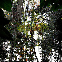 Tropical Rainforest Glasshouse (formerly Le Jardin d'Hiver or Winter Gardens), 1936, René Berger, Jardin des Plantes, Museum National d'Histoire Naturelle, Paris, France. General view of luxuriant Tropical foliage against the glass and metal stucture of the Art Deco style glasshouse through which the afternoon light is shining.