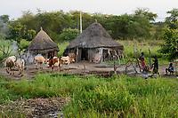 Ethiopia, Gambela, region Itang, village of ethnic group Nuer, cows  / AETHIOPIEN, Gambela, Region Itang, Ethnie NUER, Dorf, Rinder