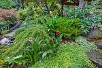 Vashon-Maury Island, WA: Hillside in a perennial garden with sedums, calla lilies, Japanese maple and fuchsia lunder a wood pavillion.