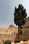 Israel, Jerusalem. Cypress tree in the Monastery of the Cross