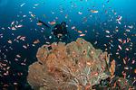 Nurul & Seafan, Verde Island