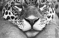 SEP 1 Paradise Wildlife Park