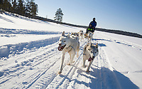 Hundeschlitten-Tour in Lappland - A Dog Sledge Ride In Lapland