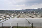 Secovlje Salt Flats