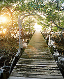 HONDURAS, Roatan, boardwalk in the mangroves at sunset, Gibson Bight
