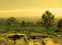 Ethereal landscape photograph of munnar Kerala with sky,hills,rocks,trees and tea gardens