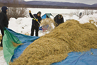 Volunteers, including race Judge Lavon Barve, rake up left over straw at Ruby on Saturday morning during Iditarod 2008