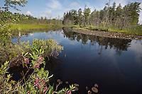 Riparian wetlands; NJ, Burlington Co., West Branch of the Wading River;